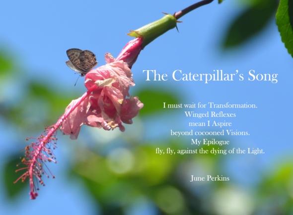 caterpillarsongimustwaitfortransformation